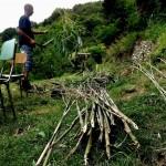 Mirko e il bambù