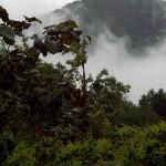 aria e acqua nel bosco intorno